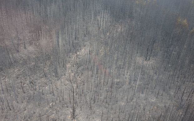 More than 300 hectares of land has been burned.