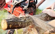 A review of safety in the forest industry has brought a huge improvement in the accident rate.
