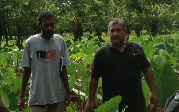 Tolo Iosefa in Vanuatu at the taro research centre in Santo.