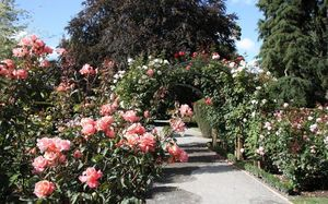 Christchurch's botanical gardens is one place where ashes may not be scattered.