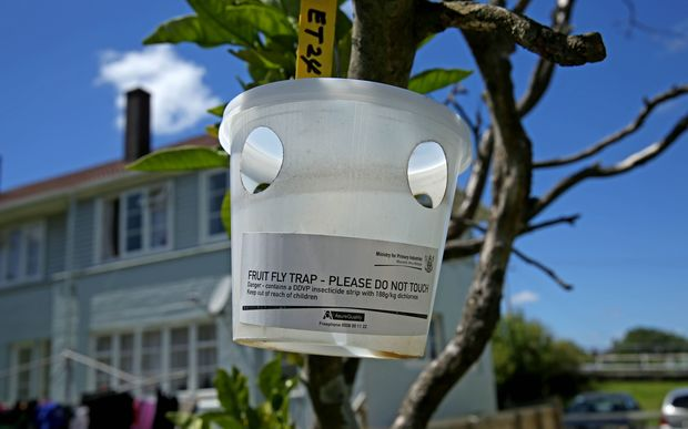 Fruit fly trap on the property where the fruit fly was found in Grey Lynn, Auckland.