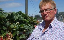 Berry grower Steve Malone.