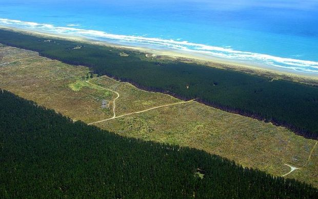 An aerial view of Aupouri Forest, alongside Ninety Mile Beach.