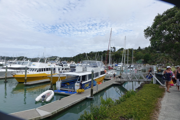 Dive boats at Tutukaka marina. A number of successful businesses have sprung up based on visitors to Poor Knights Islands.