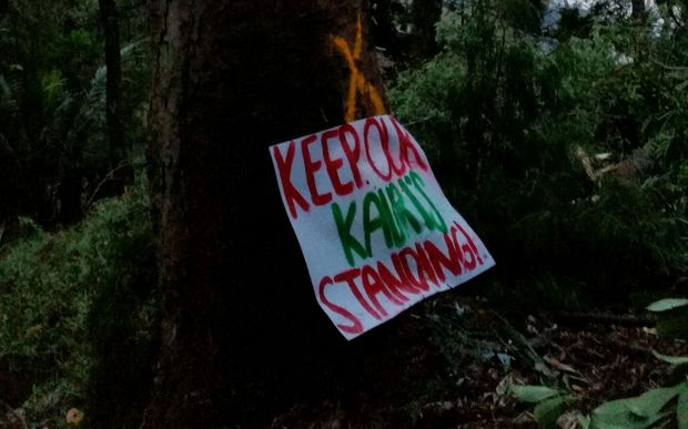 A protest sign on one of the Kauri marked to be cut down.
