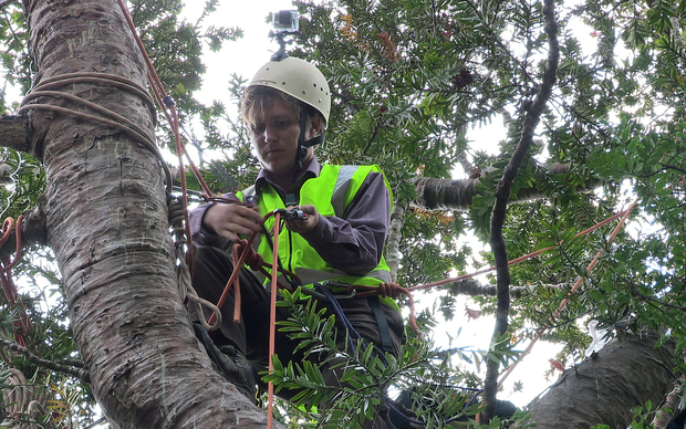 Tree climber Michael Tavares who climbed a 500-year-old West Auckland kauri tree in a bid to save it from being felled
