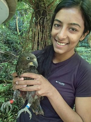 Aditi Sriram, pictured here with a kaka chick, is a vet who is studying and working towards a Massey University Master's degree as a wildlife vet.