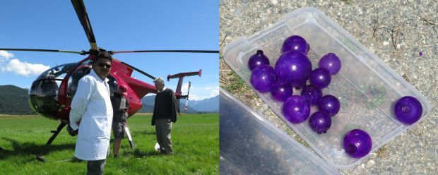 A photo of the helicopter, and the tough gel balls before being thrown out the window
