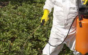Vegetables being sprayed with herbicide in a garden (file photo)