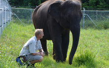 Elephants arriving to Auckland Zoo. Anjalee pictured with Auckland Zoo's Elephant Team Leader Andrew Coers