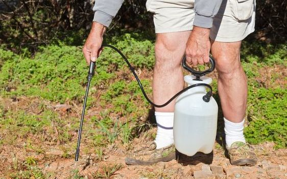Study finds 500% rise in weedkiller in human urine