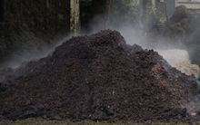 Pile of dung/poo/manure