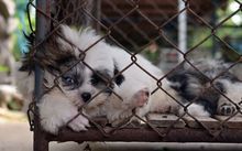 Puppy mill (file photo)