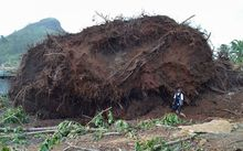 A man stands next to the upturned roots of a tree toppled during storms brought on by Super Typhoon Maysak on the island of Weno in the Micronesian state of Chuuk. Federated States of Micronesia.