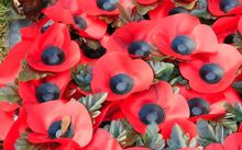 Anzac poppies.