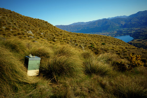 Jay Iwasaki is studying whether introduced honeybees compete with native bees, and he has introduced honeybee hives into his study area in the Remarkable Range above Queenstown.