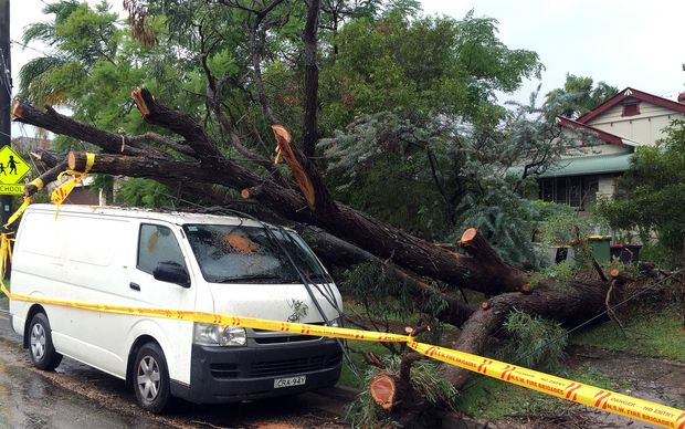 An uprooted tree fall on a parked car in the residential area of the western Sydney.