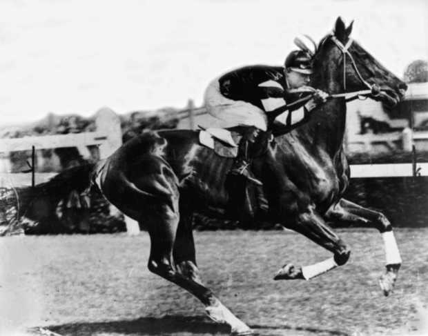 An undated handout photo of legend racehorse Phar Lap.