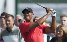 Tiger Woods has confirmed plans to play in the US Open and British Open.