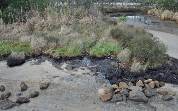 Oil on the Tauranga Harbour foreshore on Tuesday.