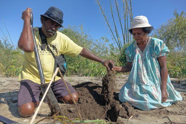 Kerby and Ellen Vatoko show me the last of their yam covered by mud from the floods at Mele Village.