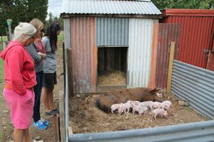 Piglets at home, Playwright Mei-Lin Te Puea Hansen and Carla van Zon at Totaranui Orchard