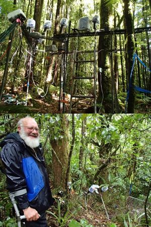 Photographer David Mudge (pictured in the bottom photo) uses sophisticated and large camera traps at Pureora to photograph clumps of Dactylanthus and visitors such as short-tailed bats.