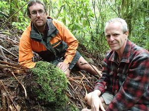 DoC ranger Thomas Emmett and botanist Avi Hozapfel next to a large, basketball-sized Dactylanthus tuber that is half out of the ground and covered in moss.