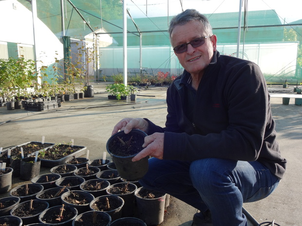 Ron Beatson with some of the hop seedlings at the Plant & Food Research research garden.