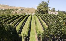 Hawke's Bay vineyard.