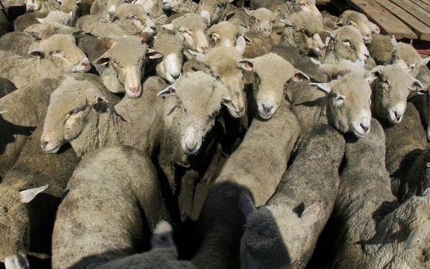No legal threats over Saudi sheep - Treasury