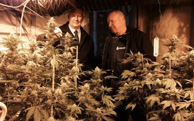 Detetective Senior Sergeant Stan Brown, left, and Detective Shane Page with some of the cannabis.