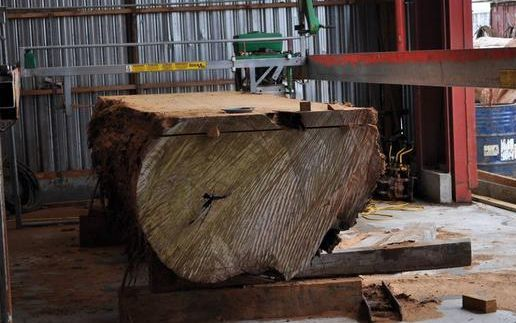 Kauri logs have been listed on the Chinese site Ali Baba.