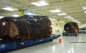 The big logs shipped to Shanghai from Auckland, which MPI says it has no records for.