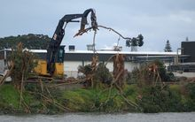Twenty three pohutakawa trees are being felled.