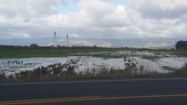 Flooded paddocks near Foxton after this weekend's rainstorm.