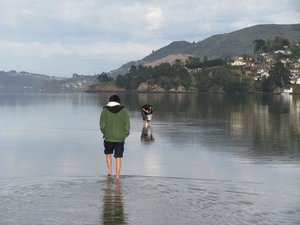 Some of the Healthy Harbour Watchers team collecting water from Otago Harbour for analysis.