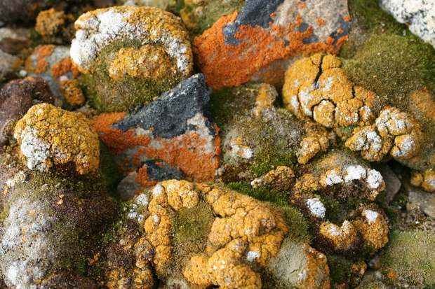 Mosses and lichens survive on, under and within rocks - wherever they can find water, at least occasionally.