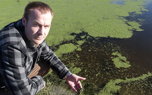 Fish and Game officer crouches beside canal of brown water topped by green algae