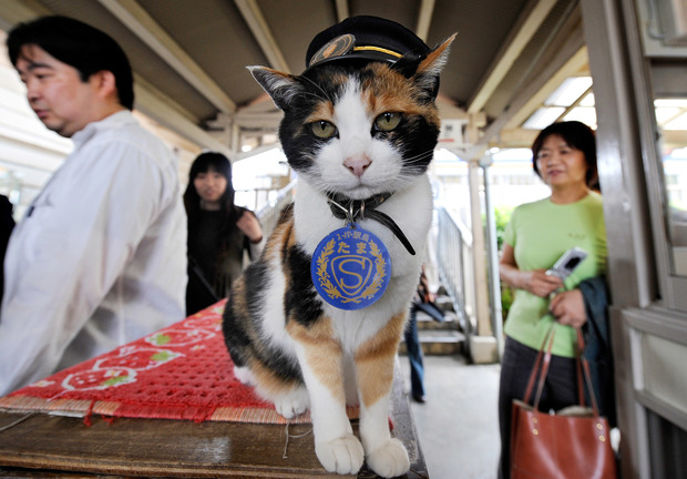 A file picture of Tama showing her custom made cap.