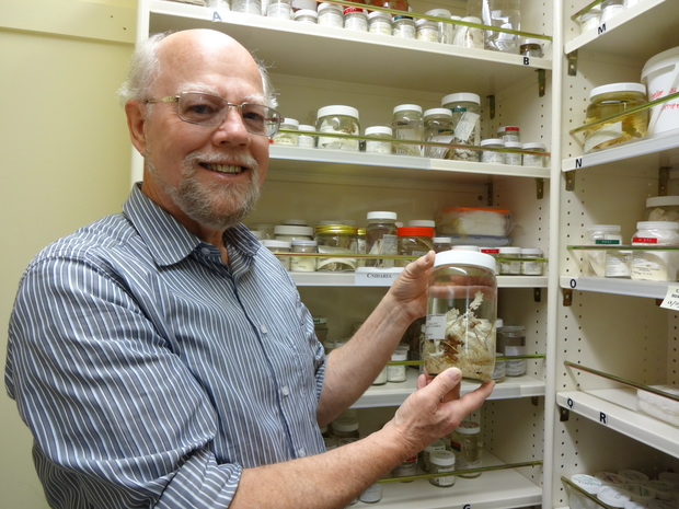 Taxonomist Dennis Gordon with a rasta coral, a gorgonian octocoral called Narella hypsocalyx Cairns, at NIWA's type collection. The coral was formally named by Smithsonian taxonomist Stephen Cairns in 2012.