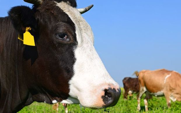 The size of the latest drop in international dairy prices has taken dairy farmers and commentators by surprise.