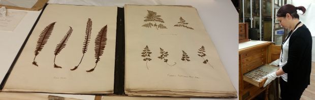 Photos from left to right of the book of pressed ferns being catalogued and Jo Fitness with the Dr Ken Fox collection