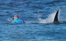 Surfer Mick Fanning is hunted by a great white shark in South Africa.