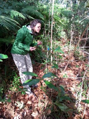 Kiri Cutting, taking environmental data in Glenpark Avenue Reserve in New Plymouth. This research site has a mostly non-native tree population, and the data is compared to nearby sites which have been restored with native trees.