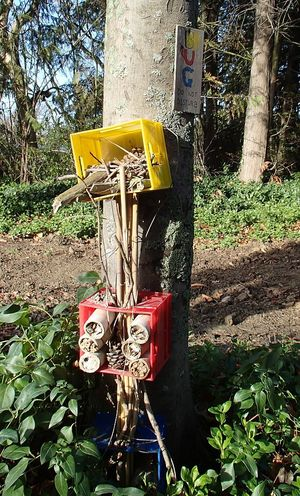 Brightly-coloured three level bug hotel on a tree trunk. This Bug Hotel had a 'do not disturb' sign, but ironically all the surrounding trees had been cut down. Rob Cruikshank thought the Bug Hotel and its tree had been spared.