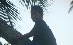 A young boy climbs a coconut tree in Tonga.