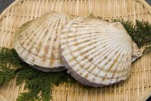Scallops (file photo).