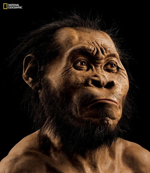 A reconstruction of a Homo naledi face, from the March 2015 National Geographic.