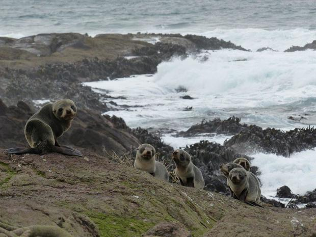 A group of undernourished seal pups.